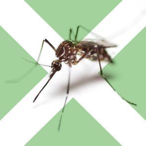 04-Surprising-Dos-and-Don'ts-of-Mosquito-Bites