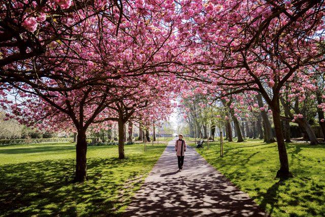 woman walking through the park