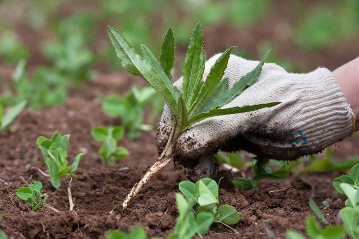 06_Environment_Surprising_Health_benefits_Gardening