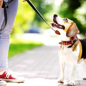 Finally!-Science-Just-Proved-That-Dog-Owners-Are-the-Best-Ever_