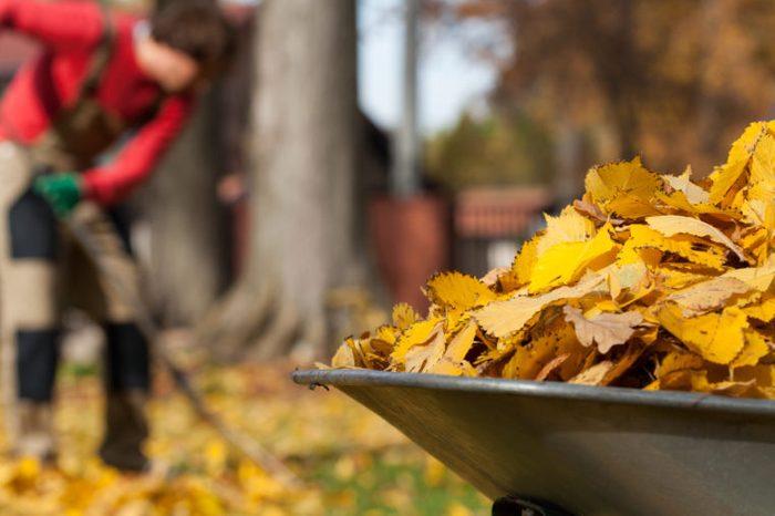 woman raking leaves