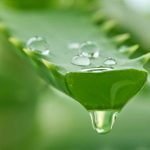10 Healing Benefits of Aloe Vera for Breakouts, Burns, and More
