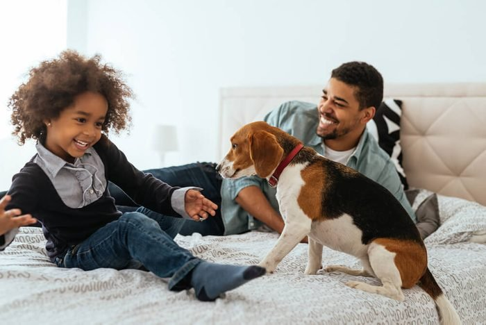 African american father and daughter spending time together with a dog on a bed.