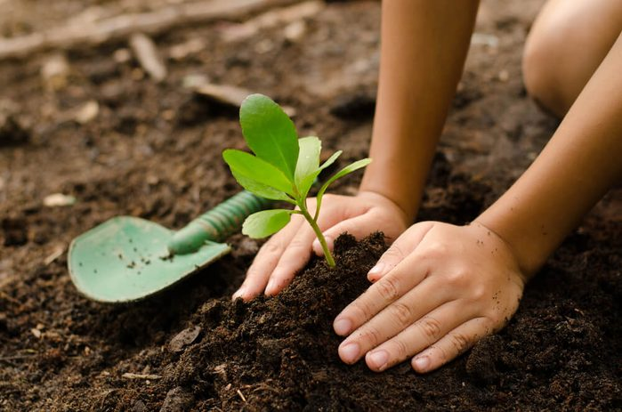 Planting young tree by kid hand on back soil as care and save wold concept