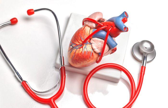 human heart medical model