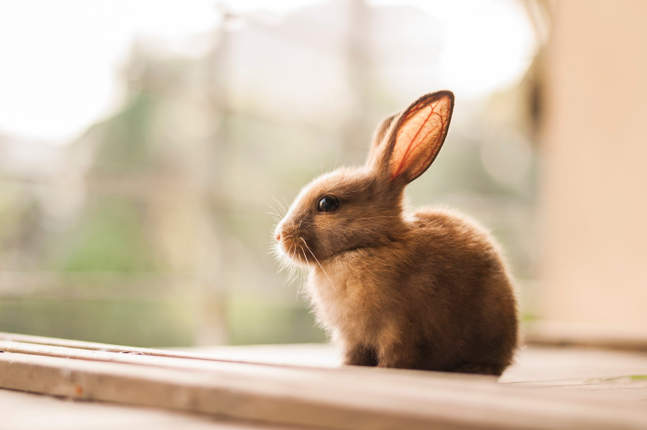 baby bunny outside