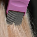 A Guide to Head Lice Symptoms and Treatments