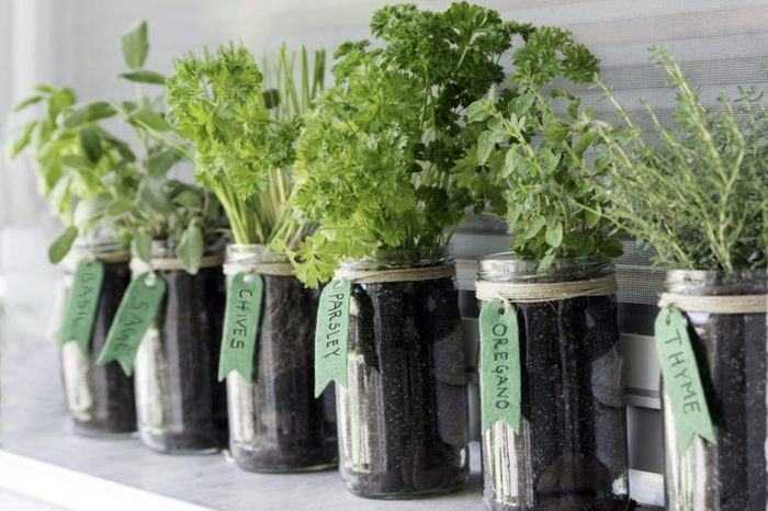 different herbs (basil, sage, chives, parsley, oregano and thyme) growing in mason jars