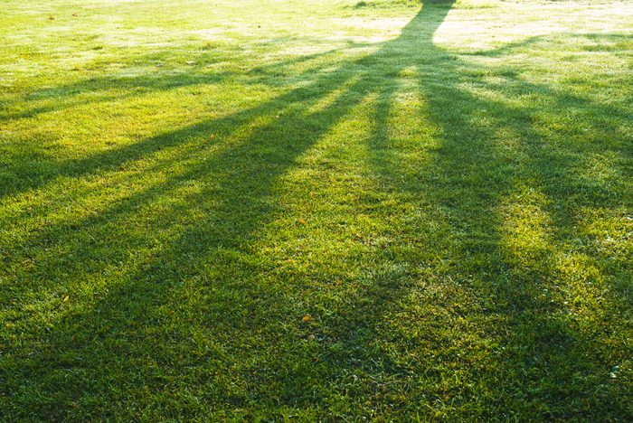 shade of a tree branches on turf grass in park