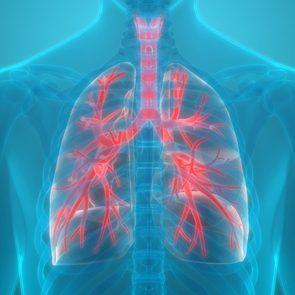 lung organ 3d medical illustration