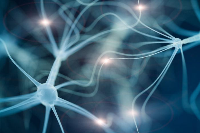 neuron cell network and choline
