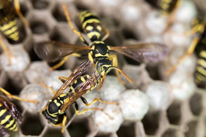 wasp on hives