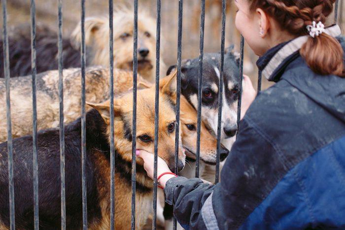 Girl volunteer in the nursery for dogs. Shelter for stray dogs.