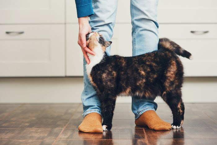 Domestic life with pet. Cat welcome his owner (young man) at home.
