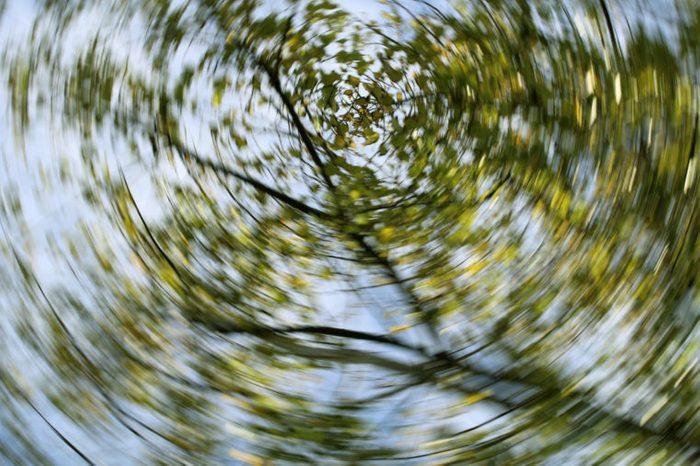 dizzy view of trees sky