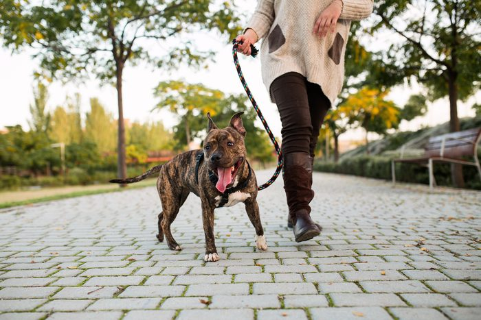 low view of an anonymous woman walking a dog at a park