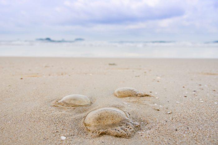 The Jellyfish on the beach