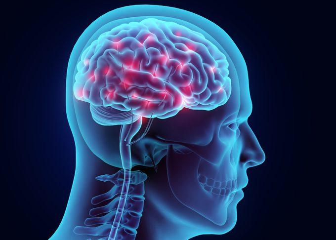 3d illustration of the human brain