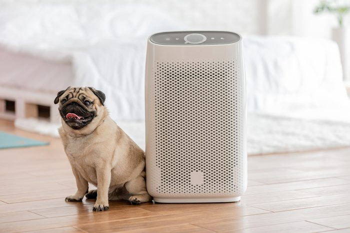 dog sitting next to an air purifier in home