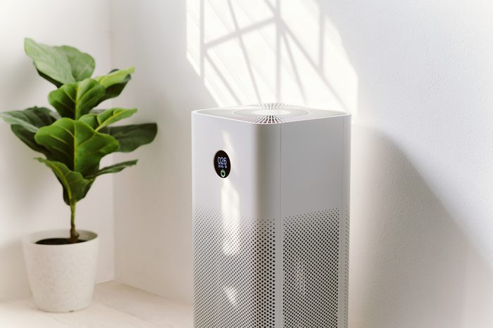 air purifier in home next to house plant