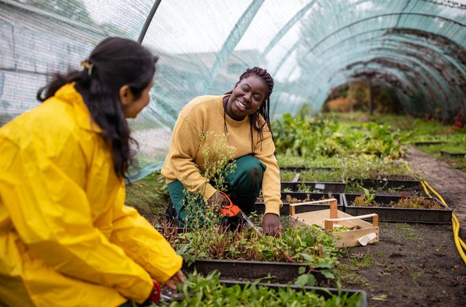 Women chatting while working in greenhouse