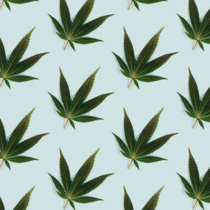 Big beautiful green leaf of marijuana close up