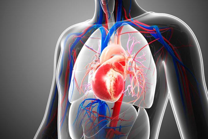 3d medical illustration of child's heart