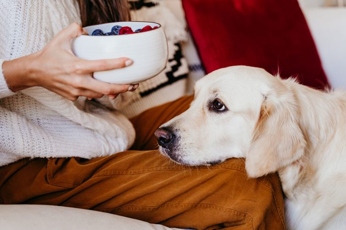woman holding a bowl of fruits with blueberries and raspberries at home during breakfast. Cute golden retriever dog besides. Healthy breakfast with fruits and sweets. lifestyle indoors